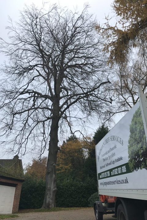 Section felling is used when a large tree is close to buildings or roads