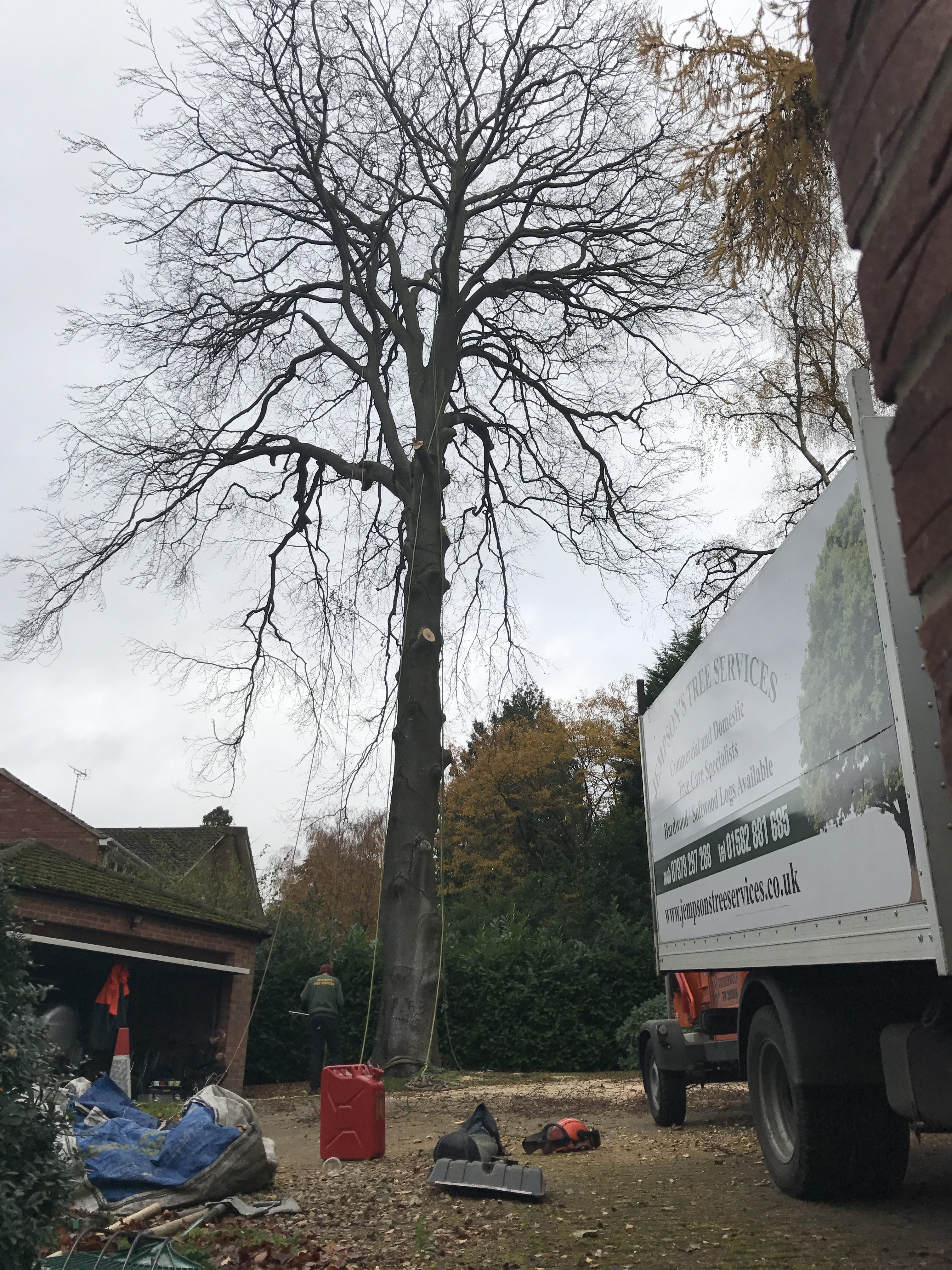 Branches are carefully removed from the base upwards (so that they can be lowered in clear space)